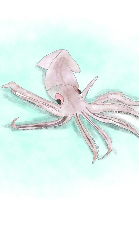 イカ2/Squid,Australia,NZ